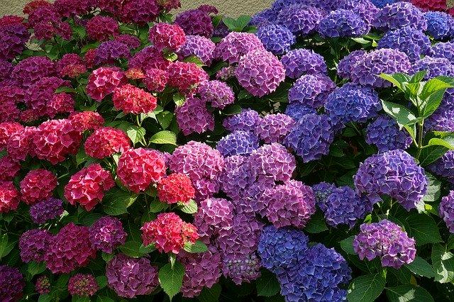 flowers-2062232_640.jpg