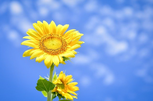 flowers-3598500_640.jpg