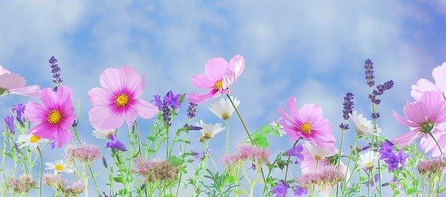 wild-flowers-571940_640.jpg