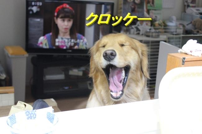 IMG_4922アニーくび1