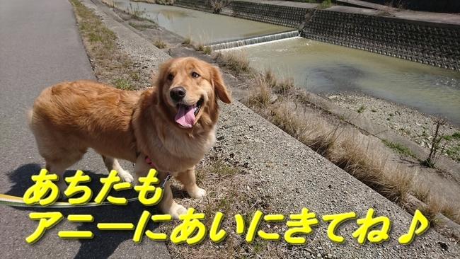 010人生ゲームブログラスト