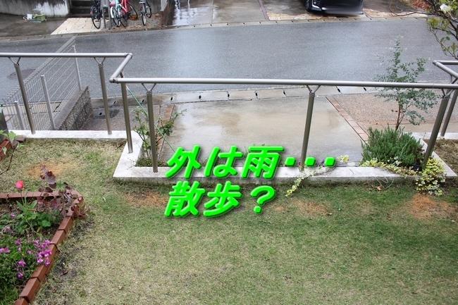 IMG_6577雨