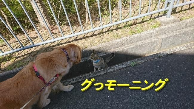 012猫との遭遇5
