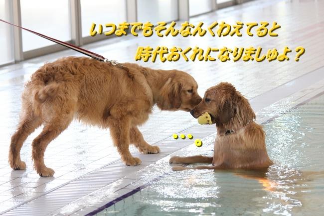 IMG_51780301.jpg