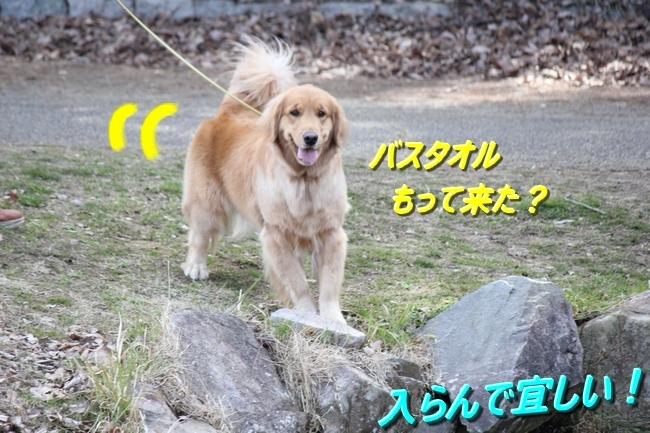 IMG_52960304.jpg