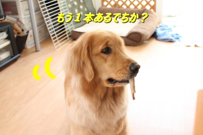 IMG_58130315.jpg