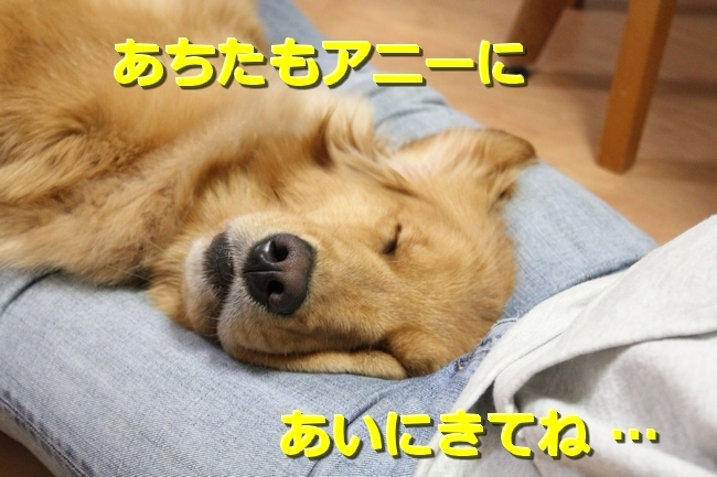 IMG_58250328.jpg