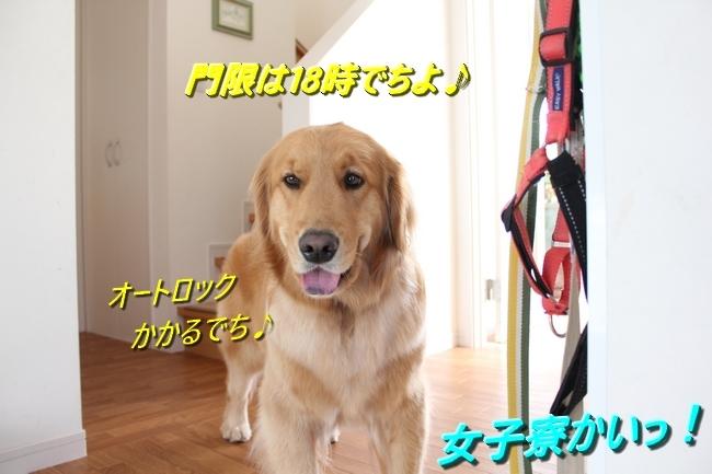 IMG_61210325.jpg