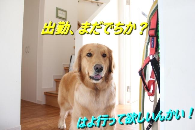 IMG_61240407.jpg