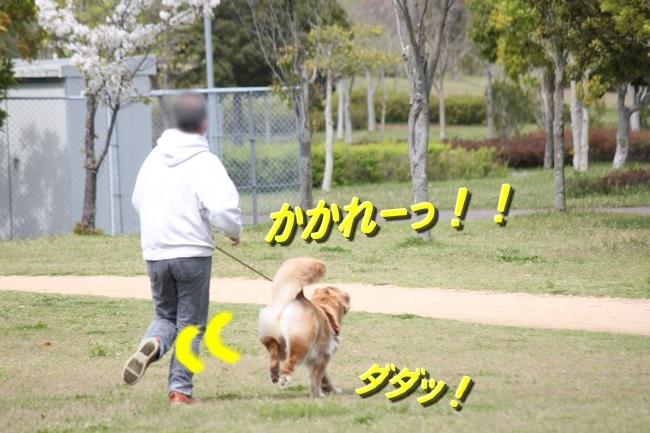 IMG_65950409.jpg