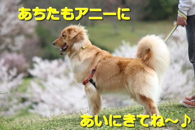 IMG_66110407.jpg