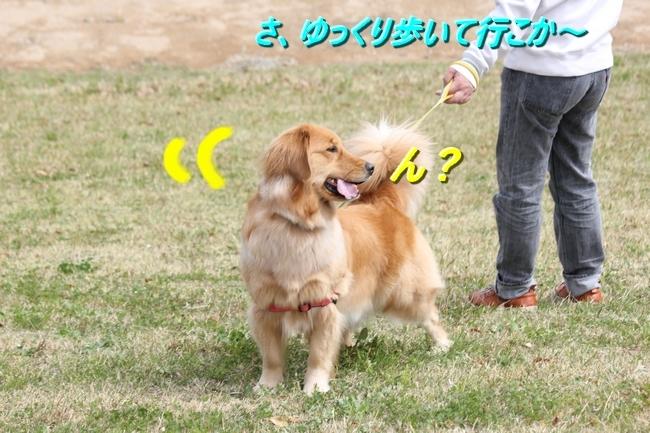 IMG_66170409.jpg