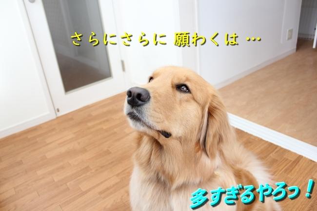IMG_70550423.jpg