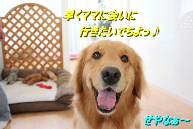 IMG_76930511.jpg