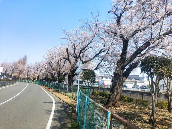 出社途中に桜を撮影してみました。