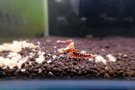 shrimp cafe_3221
