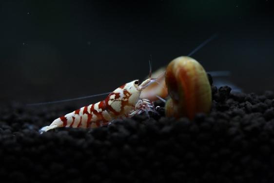 shrimp cafe_3445