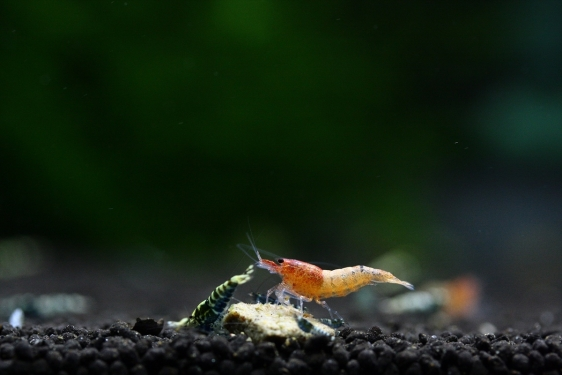 shrimp cafe_3462