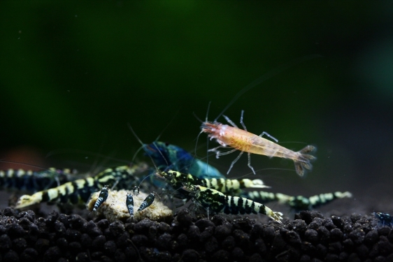 shrimp cafe_3461