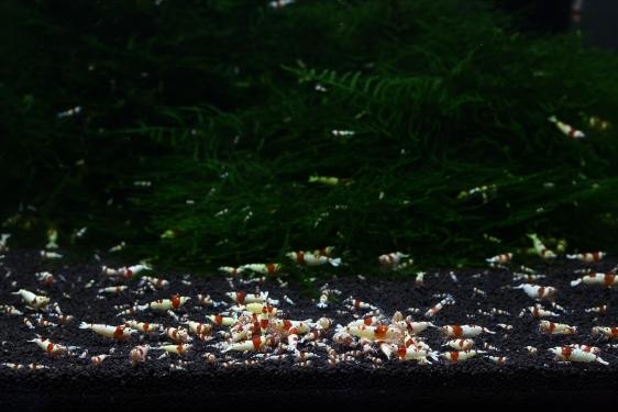 shrimp cafe_3507