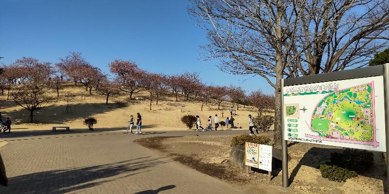 いせさき市民のもり公園20210228