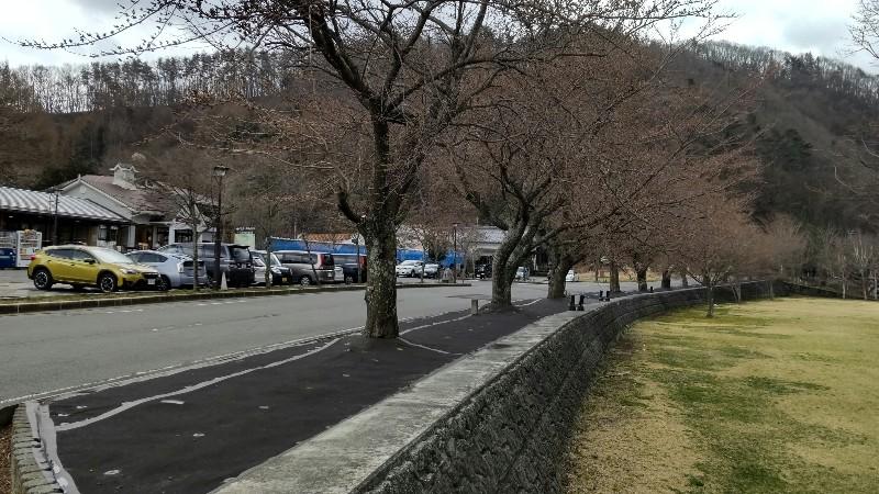 道の駅かつやま桜蕾202103
