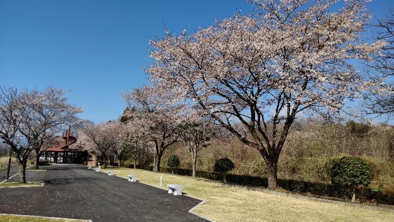 戸田水辺公園桜202104