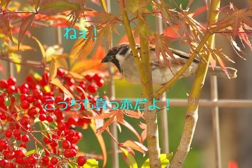 100_202011212335242b5.jpg