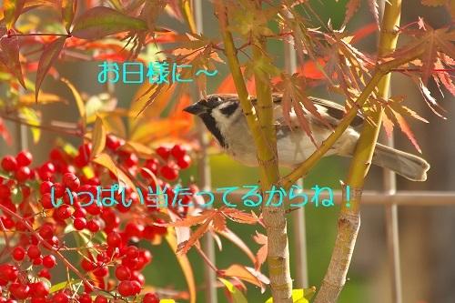 110_20201121233526641.jpg