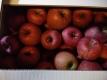 自家用リンゴ