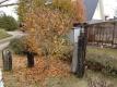 シデコブシの落葉