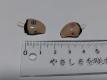 耳穴式補聴器