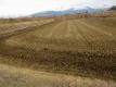 堆肥が撒かれた田んぼ