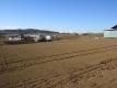 午後の麦畑②