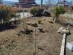 長女の家の庭