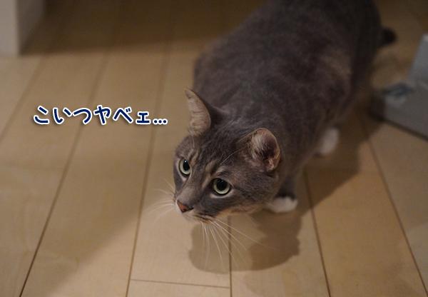 DSC09603a.jpg