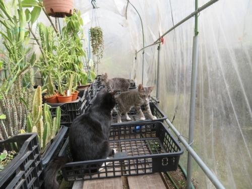 簡易ビニールハウス内に、近所の子猫が・・・来てしまった\(-o-)/、2020.11.06