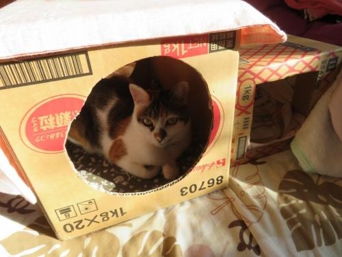 三毛富士子ちゃんの大きい段ボール箱に入っています\(^o^)/♪2020.11.17
