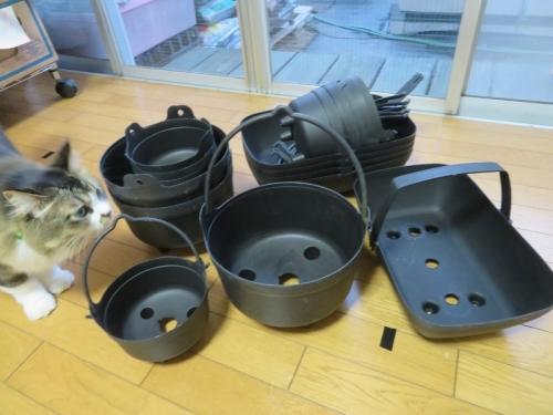取っ手付き鍋型プラスチック・プランター、全体像はこんな感じ~多肉・サボテン寄せ植えにもいい感じ~♪2020.11.22