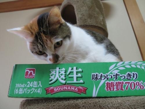家猫、富士子ちゃんは、実はクロちゃんと兄弟です。爽生、味わいスッキリ、糖質70パーセントオフは金麦よりもお値段安くておいしいらしい(^^♪2021.01.05