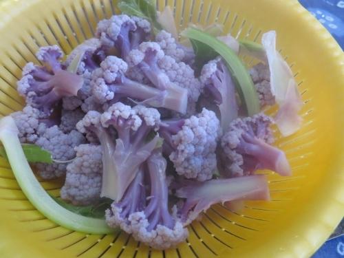 紫色のブロッコリー(パープルフラワー)お酢&塩を入れて気上げ♪2021.01.29