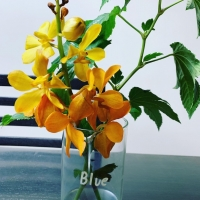 オレンジの花33AF96D5-
