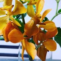 テーブルの花E15B14CE-