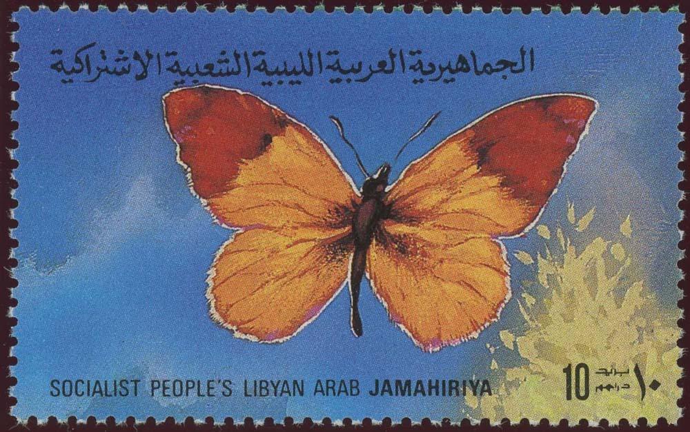 Libya:1981-5