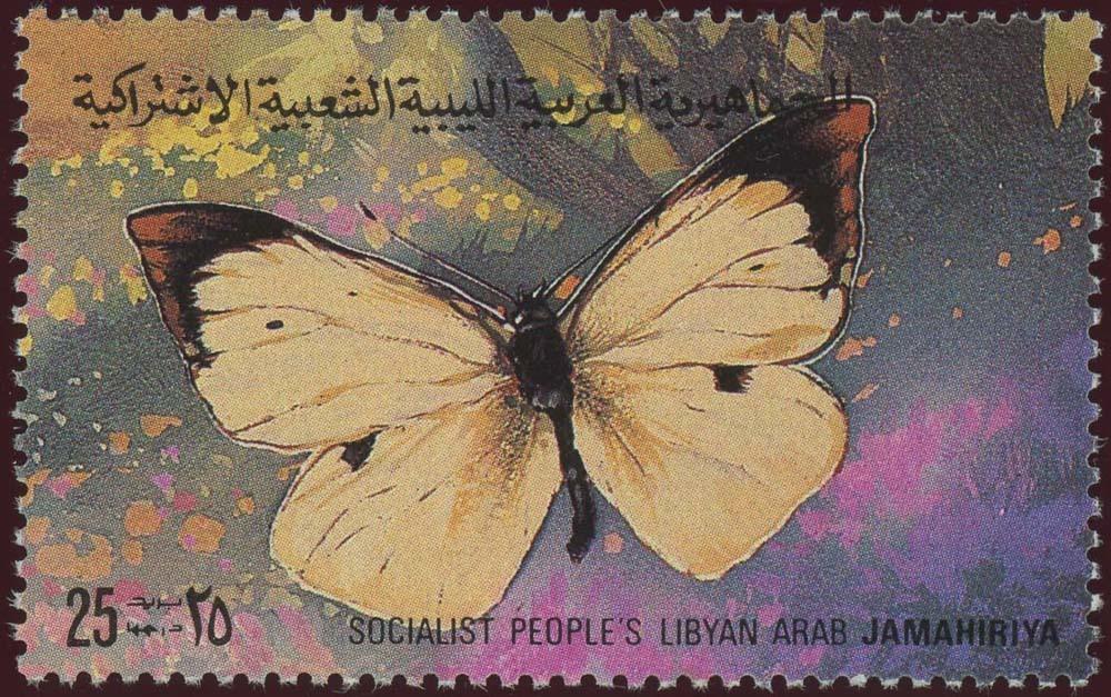 Libya:1981-14