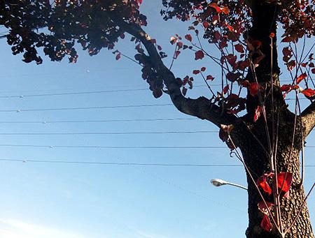 1025花水木通り2