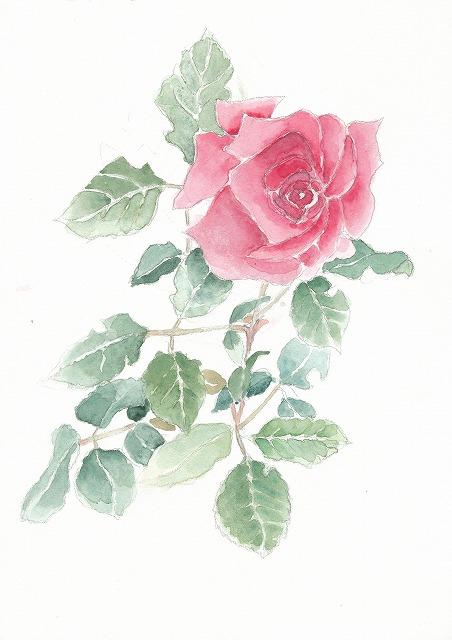 s-薔薇の花
