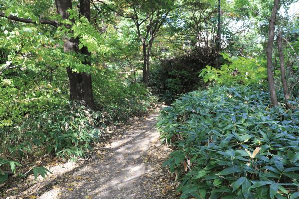2020-10-22精進川河畔公園2
