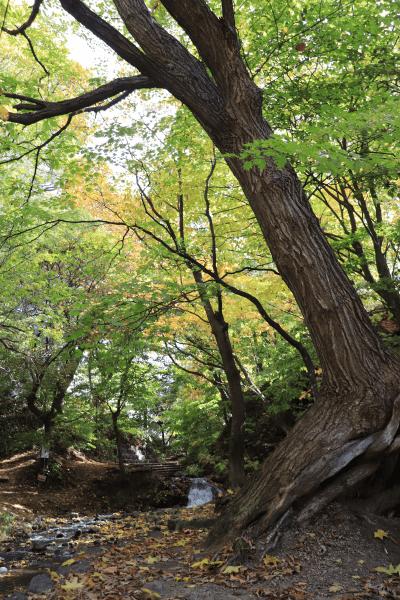 2020-10-22精進川河畔公園8