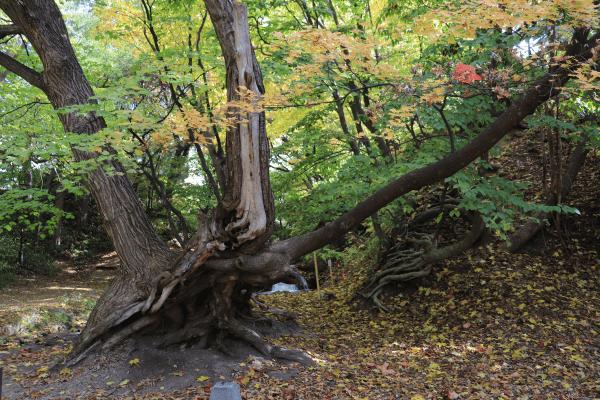 2020-10-22精進川河畔公園5
